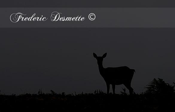 red-deer-cervus-elaphushind-silhouette-000088